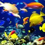 01 Тропические рыбки 01